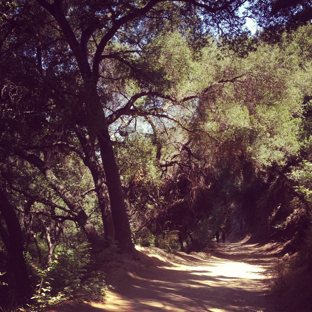The Claremont 5 Mile Loop