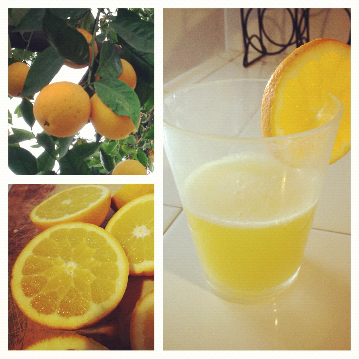Fresh Squeezed OJ